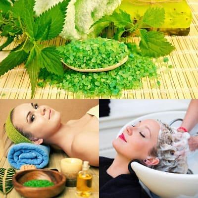 Зеленая крапива: свойства для волос.